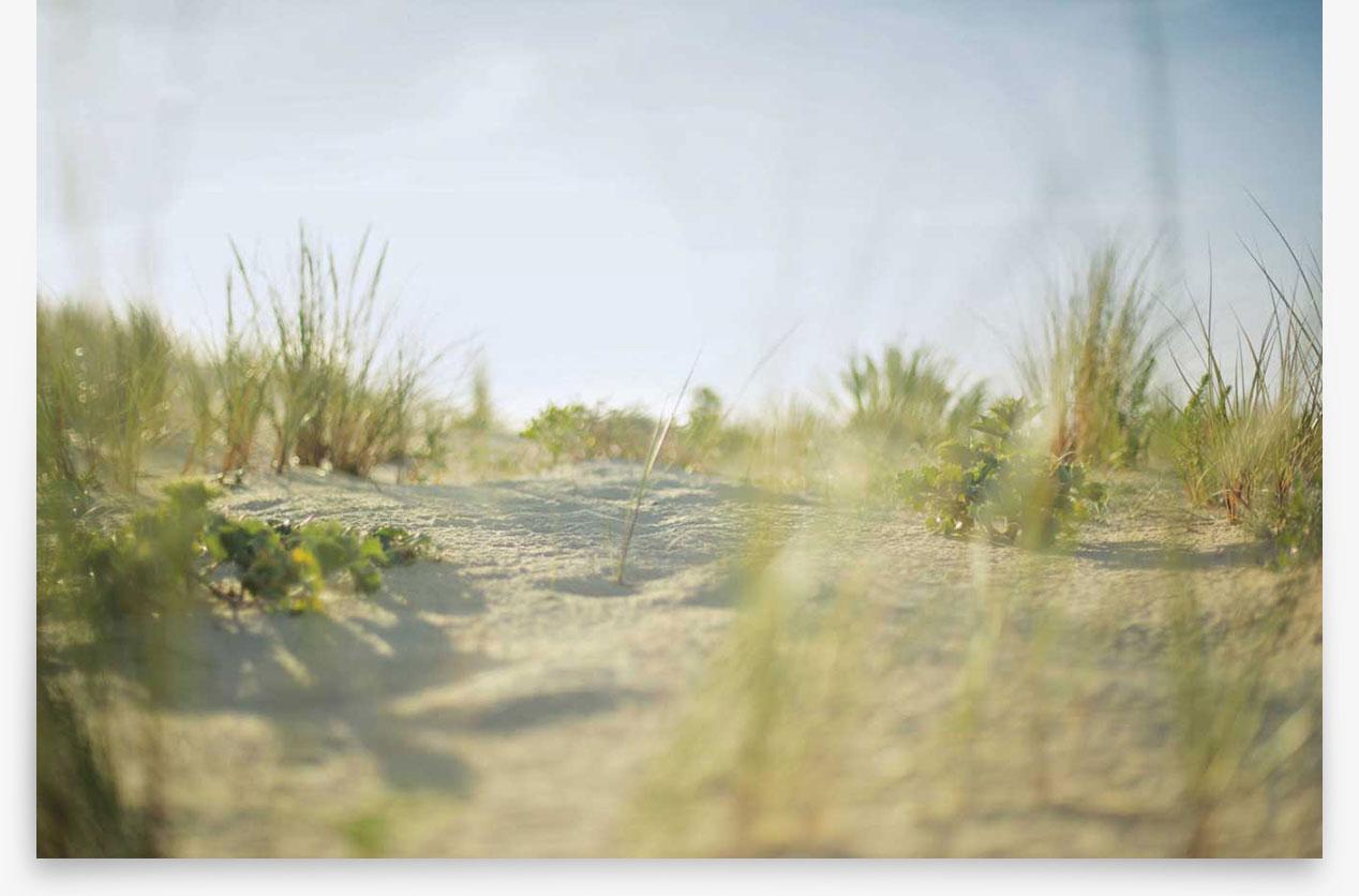 La Dune et sa flore, zone protégée.